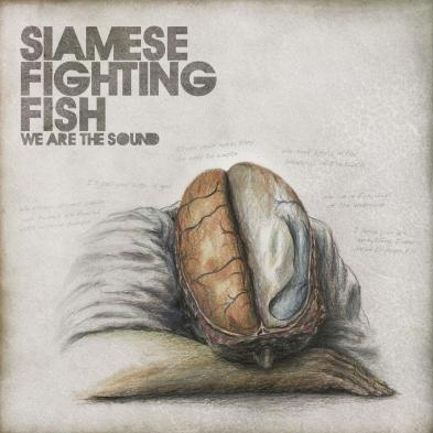 Siamese Fighting Fish - We Are The Sound