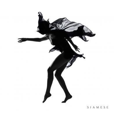 Siamese - Siamese